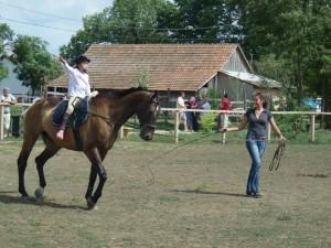 Voltizsálás - Baberliget lovasklub